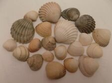 Mixed Shells Unpolished Collectable Shells/Corals/Starfish
