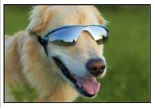 Doggles K9 Optix Dog Sunglasses Rubber Frames Blue Frame/Smoke Lens SZ XXS Disc.