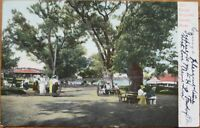 Salem Willows, MA 1905 Postcard w/Applied Glitter - Massachusetts Mass