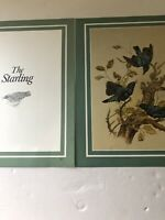 Garden Birds: The Startling Original Bird Print By Maurice Pledger 41 Yrs Old