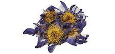 1 oz. Premium Whole Blue Lotus Nymphaea Caerulea Dried Sacred Waterlily