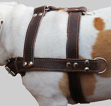 """Real Leather Dog Pulling Harness 33""""-37"""" chest size Rottweiler Cane Corso"""