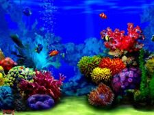 """Tropical Fish Colourful Wall Art Printed on Canvas 22"""" x 16"""" Solid Frame"""