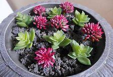 Miniature Artificial Succulents 12 Plants Lotus Stone Grass Doll House Decor