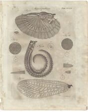 1798 Microscopic Objects EARWIG WING barnacle CORNEA MAGNIFIED plate print