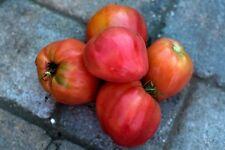 HUEVO de TORO Tomate variedad tomate antiguo 50 semillas seeds