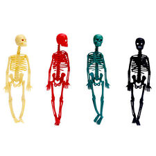 Human Body Skeleton Model Stand Poster Medical Aid Baby Kids Learn Toys Gifts