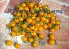 Wildtomate Golden Currant - 25 Samen