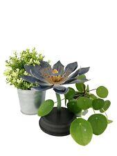 Botanical flower - Flower model