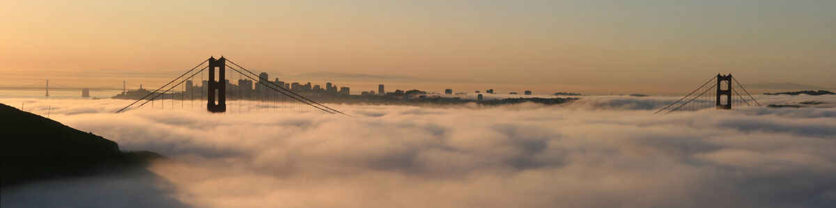 Fog City Auctions