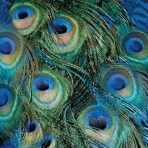 4 single paper napkins 33 cm, Peacock feathers large, decoupage, crafts R3001