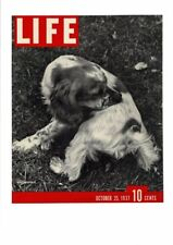 VINTAGE 1937 LIFE MAGAZINE COVER SPANIEL BIRD HUNTING DOG PRINT AD