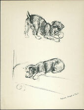LAKELAND TERRIER DOGS AT PLAY LOVELY VINTAGE 1930'S DOG ART PRINT by KF BARKER