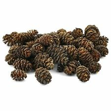 Black Alder Cones (Healthy Aquarium Water Shrimpt ) - 30 / 75 / 150g