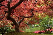 Photo de fresque murale papier peint 254x184cm floraison arbre feuilles rouges pour chambre à coucher