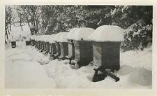 PHOTO ANCIENNE - VINTAGE SNAPSHOT - APICULTURE RUCHE MIEL NEIGE - HIVE SNOW