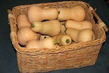 FARM RAISED ORGANIC NON-GMO BUTTERNUT SQUASH SEEDS RESISTS SQUASH BORERS LOW S&H