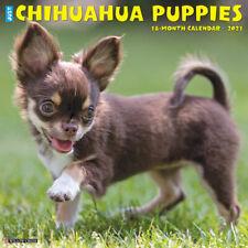 Just Chihuahua Puppies (dog breed calendar) 2021 Wall Calendar (Free Shipping)