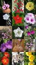 Ipomoea Mix, rare morning glory climber flowering vine merremia seed -20 seedS