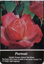 Portrait Pink Yellow Center Rose 2 Year Live Bush Plants Shrub Plant Fine Roses
