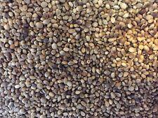 Higgins Bird Hemp Seed for Birds diet food