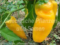 🔥 🌶️ golden Marconi Paprika orange sehr ertragreich 10 frische Samen Balkon