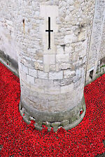 STUNNING LONDON CITYSCAPE CANVAS #384 TOWER OF LONDON POPPIES A1 CANVAS PICTURE