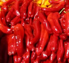 VEGETABLE HOT CHILLI PEPPER ROKITA 150 SEEDS
