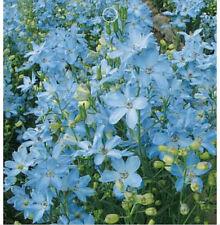 FD1548 1 Bag 30 Seeds Blue Larkspur Seed Delphinium Consolida Flowers Seeds