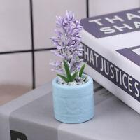 1:12 Dollhouse Miniature Mini Potted Plant Dolls House Accessories Decor JM YK