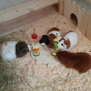Meerschweinchen Hase Kleintier Intelligenz Spielzeug Beschäftigung Futter 80039