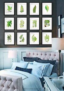 Set of 12 Fern Prints 5x7 size Green Antique Botanical art wall hanging