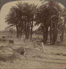 Egypt. The Winnowing of the Grain After Threshing. Peasants Work - Stereoview