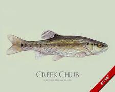 CREEK CHUB MINNOW FISH PAINTING AMERICAN FISHING ART REAL CANVAS PRINT