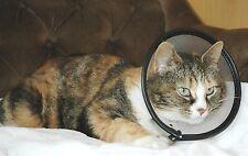 Company of Animals Cat Smart Recuperación collar apto para gatos