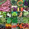 Gemüse Samen Tomate Gurke Paprika Karotte Radieschen Kürbis Kohlrabi Kohl Salat