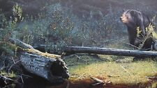 More details for black bear beaver dam canada out of the shadows print by brent townsend