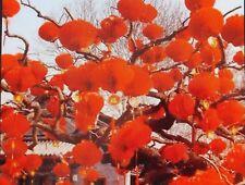 12 RED CHINESE PALACE PVC 18cm LANTERN PARTY WEDDING BIRTHDAY JAPANESE GARDEN