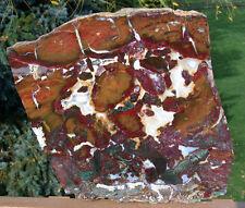 "SiS: BRILLIANTLY Colored 13"" Marston Ranch Jasper Specimen!"