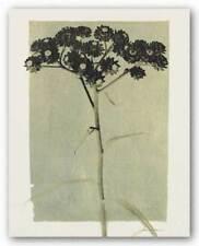 Silver Stern IV James Burghardt Art Print 14x11