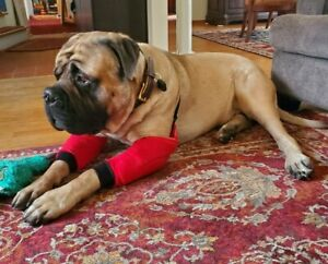 Dog elbow protectors, callus cuff, hygromas ,arthritic joints padded All breeds.