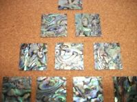 One Inch Square Paua Shell Flat  Blank 4 Inlay