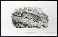 1808 William Darton Original Antique Print of a Wild Cat