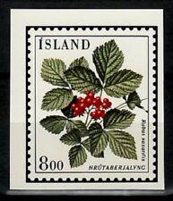 Photo Color Essay, Iceland Sc602 Flower, Rubus saxatilis.