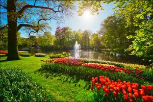 Vlies FOTOTAPETE TAPETEN ROLLEN XXL Garten voll von Tulpen 1259