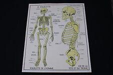 V230 Affiche scolaire papier Rossignol 9 Excrétion 10 Squelette os 90*75 cm