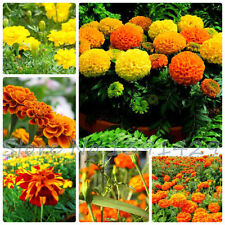 H3 (-5 to 1 ° C) Hardiness Perennial Flower & Plant Seeds