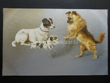 Dog Theme Depicts FAMILY OF DOGS - THREE PUPS c1905 Postcard by W&K 535