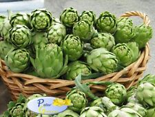 Rare Seeds Artichoke Green Ball Heirloom Vegetable