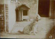 France, Chien près de sa niche, ca.1895, Vintage citrate print vintage citrate p